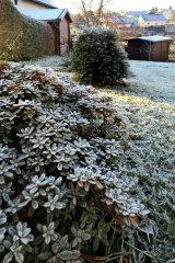 Frost T in Frostig.