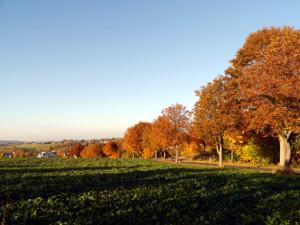 Herbst16 T in Wieder Herbst
